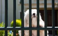 Picking the Right Fence for Your Pets