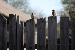 Contemplating a backyard fence repair? Here are some things to consider.